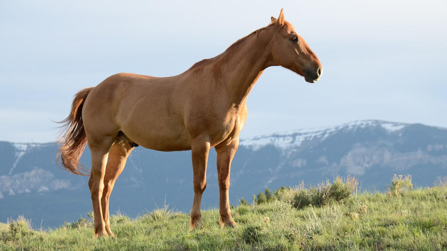 3 aandachtspunten bij het meenemen van je paard naar het buitenland